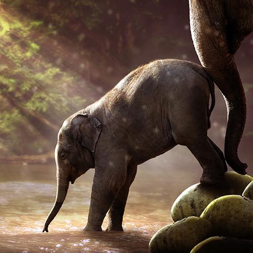 claudia-veith-kinesiologie-coaching-elefanten