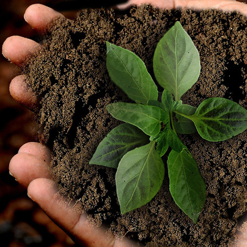 claudia-veith-gsn-kurs-nachhaltigkeit